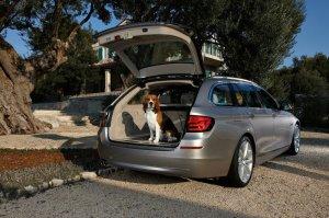 BMW-News-Blog: Fellnasen und Vierbeiner im Auto: Das muss man bea - BMW-Syndikat